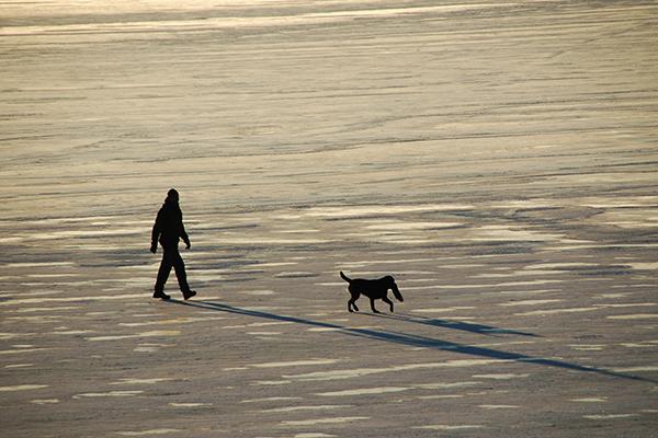 凍った湖を散歩する人と犬