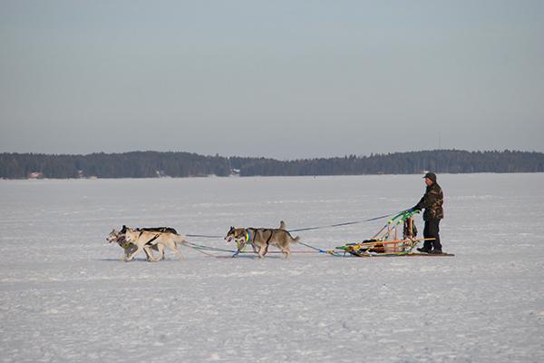 凍った湖上の犬ぞり